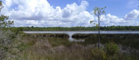 bayou-garcon